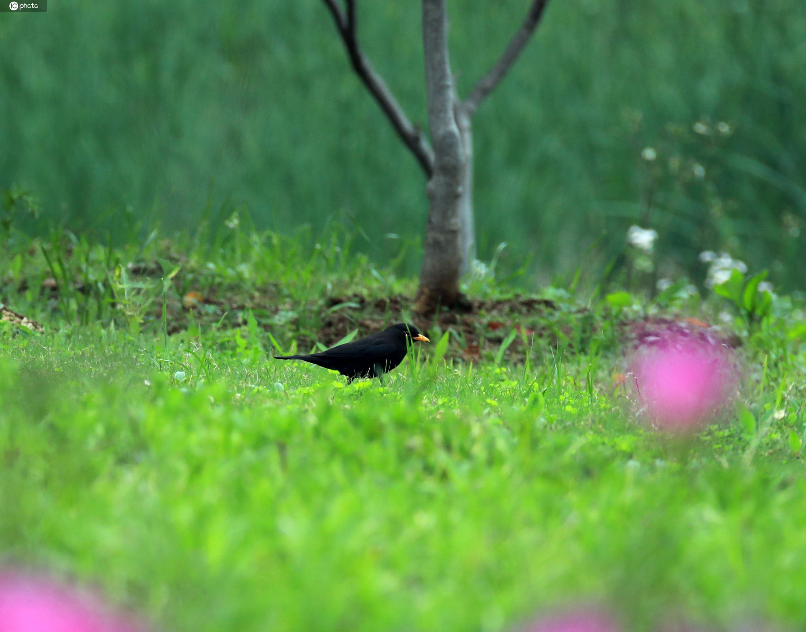 武汉沙湖公园 鸟语花香万物复苏