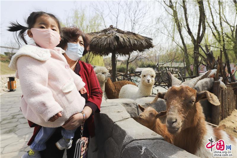 青岛森林野生动物世界 在花开中恢复开园