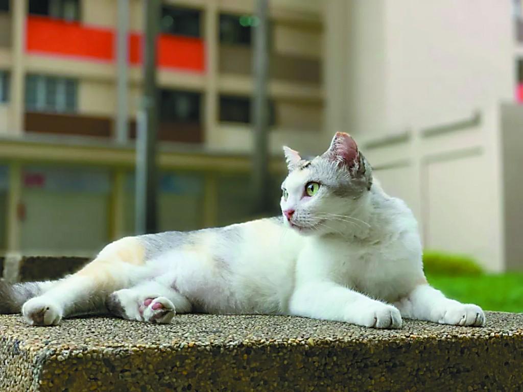 走遍世界去看猫