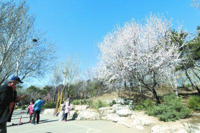 玉渊潭公园制订赏樱季应急预案