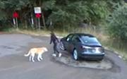 美国一宠物狗树林深处被丢弃浑然不知?以为主人带自己散步开心摇尾巴