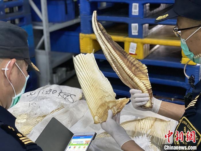 厦门海关破获走私濒危物种深海长尾鲨案