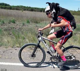 阿根廷自行车运动员训练时路遇脱水狗狗救起扛在肩上