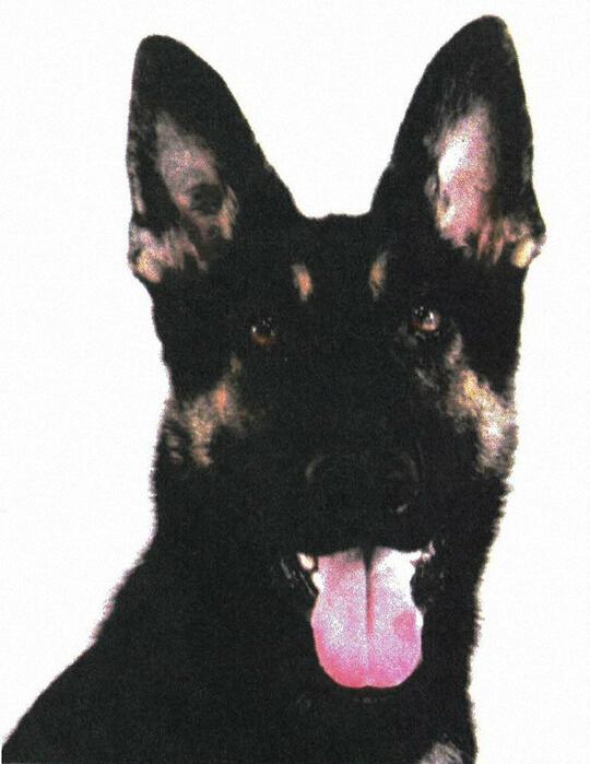 日本警犬寻找失踪职员时失踪 40名警员征采2天仍未果 第1张