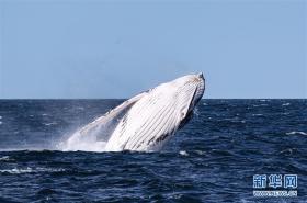 疫情影响澳大利亚观鲸小镇旅游业