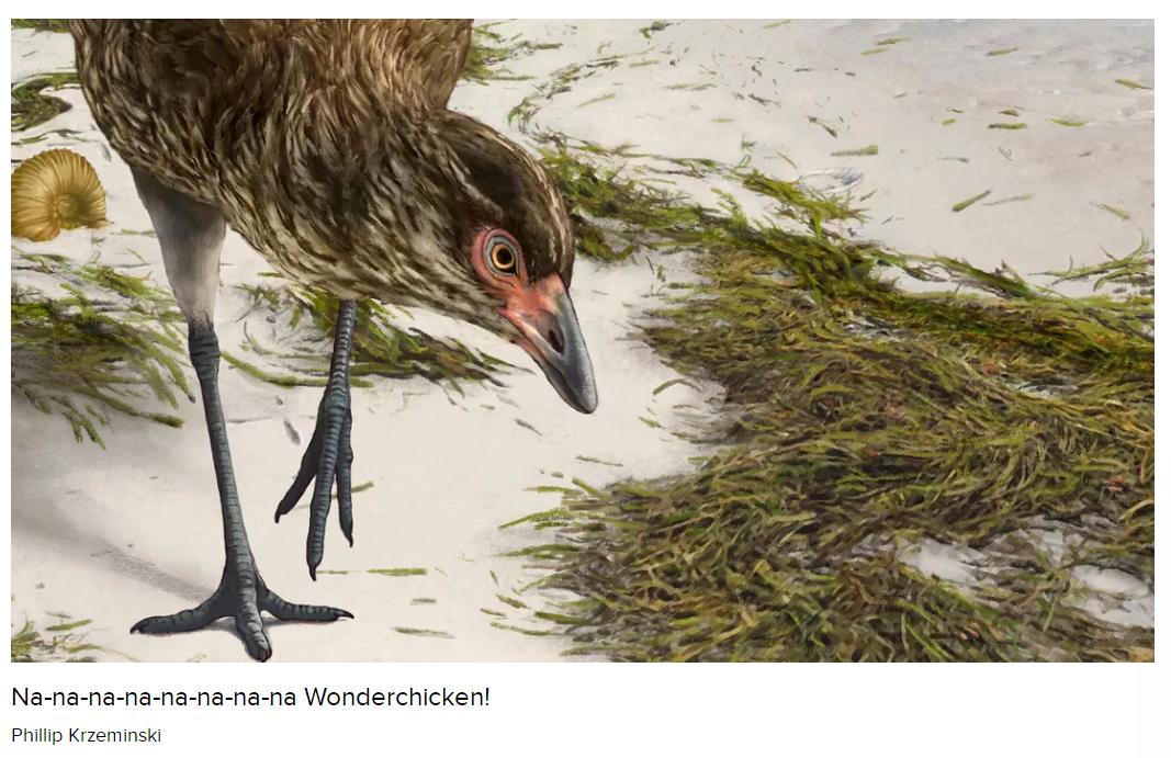 """科学家发现最古老的现代鸟类化石""""神奇鸡"""""""