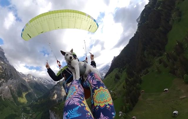瑞士一只狗狗与主人一起乘坐滑翔伞全程淡定