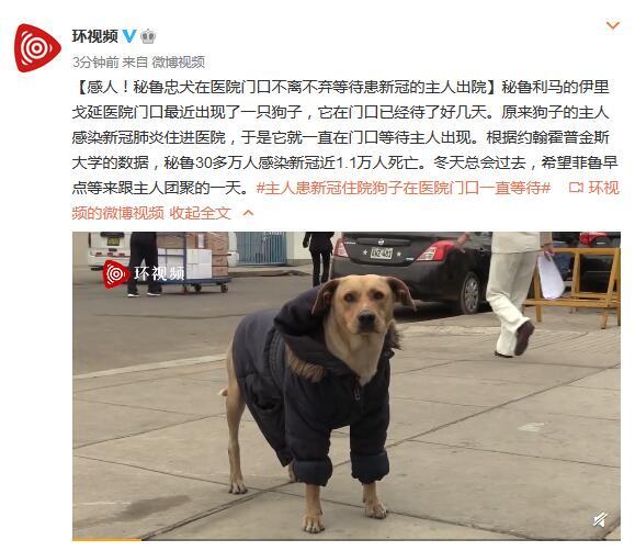 欧博客户端下载:感人!秘鲁忠犬在医院门口不离不弃守候患新冠的主人出院 第1张
