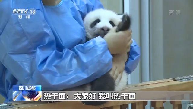 """吃竹子的""""热干面""""""""蛋烘糕""""""""春生"""" 三只大熊猫宝宝初长成"""
