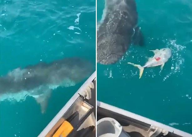澳大利亚16岁少年钓鱼时船被三条鲨鱼包围
