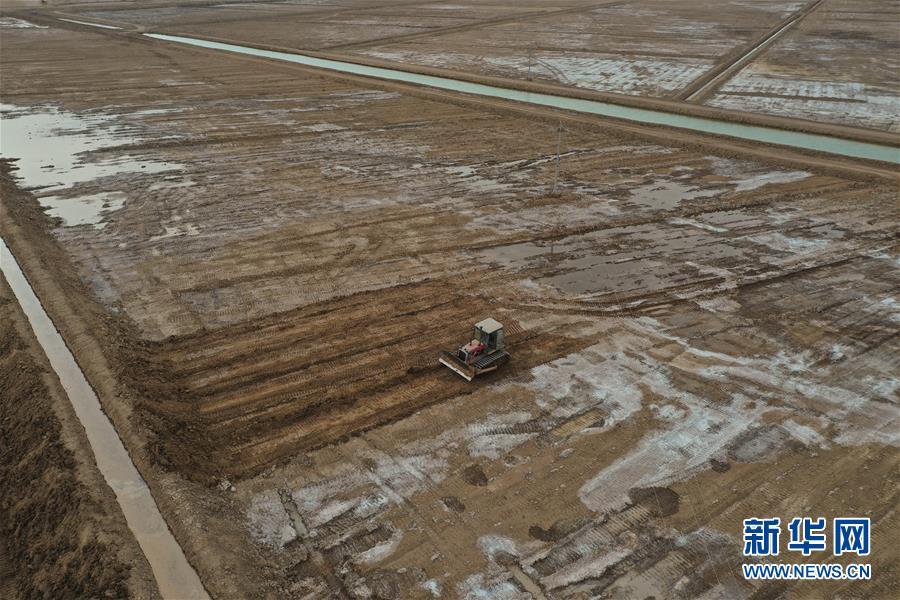 内蒙古:黄河南岸农事忙
