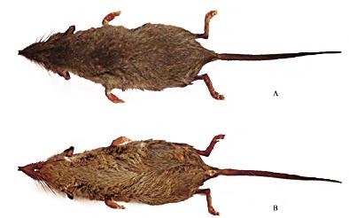 安徽黄山发现两个哺乳类新物种
