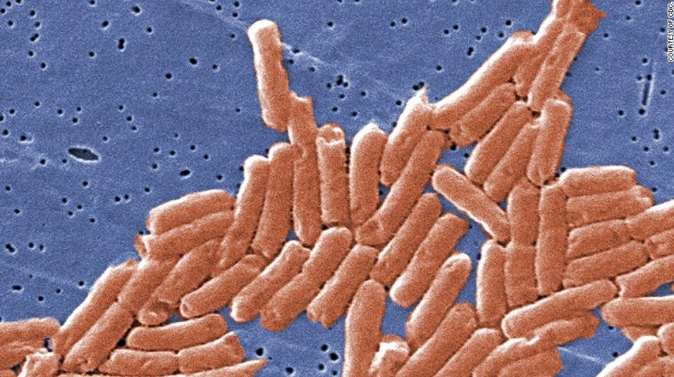 美国沙门氏菌疫情已致43州640人感染 来源或为洋葱