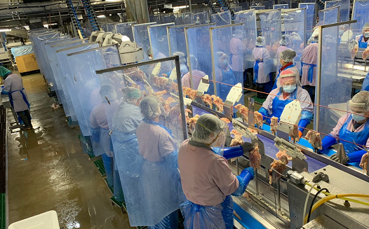 皇冠注册:60名罗马尼亚工人在英国的肉类加工厂熏染新冠病毒 第1张