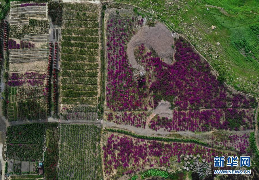 重庆万州:生态产业促发展