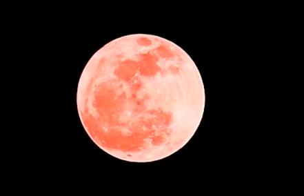 """""""粉红月亮""""即将出现:年度最大、最亮的满月"""