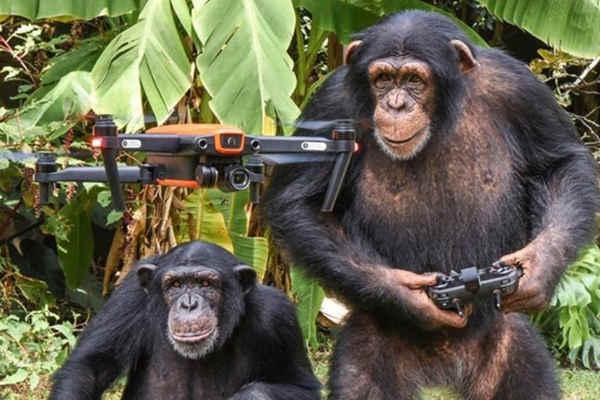 """国外""""黑猩猩飞无人机""""视频播放过百万,却是摆拍的"""