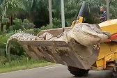 印尼一条半吨重鳄鱼被杀死后用推土机搬运