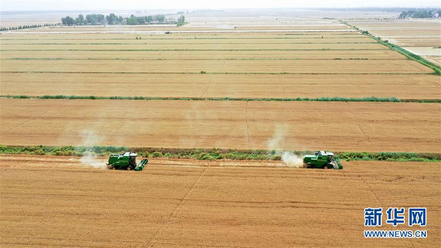 安徽小麦陆续开镰收割