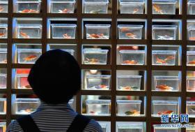 3000余尾精品金鱼亮相福州三坊七巷