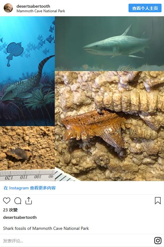 科学家在肯塔基州发现3.3亿年前鲨鱼头 化石遗迹可能在洞穴壁上找到