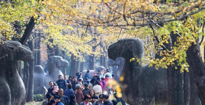 南京紫金山古道色彩斑斓吸引游客