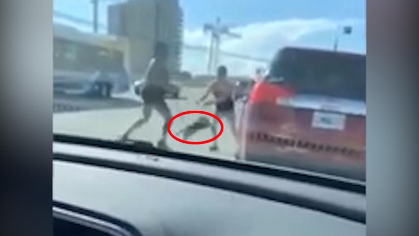 加拿大两名女司机在马路中间大打出手一方抢夺宠物狗当武器