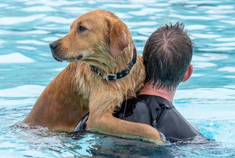 英国一小镇举办狗狗游泳比赛 场面滑稽令人捧腹