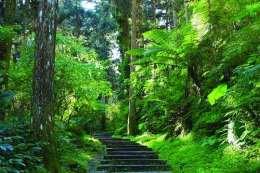 我国已有12条国家森林步道 全长超22000公里