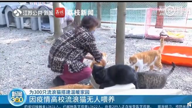 朗生狗粮_暖心!志愿者救助因疫情被遗弃流浪猫:300多平米树林猫舍是 ...
