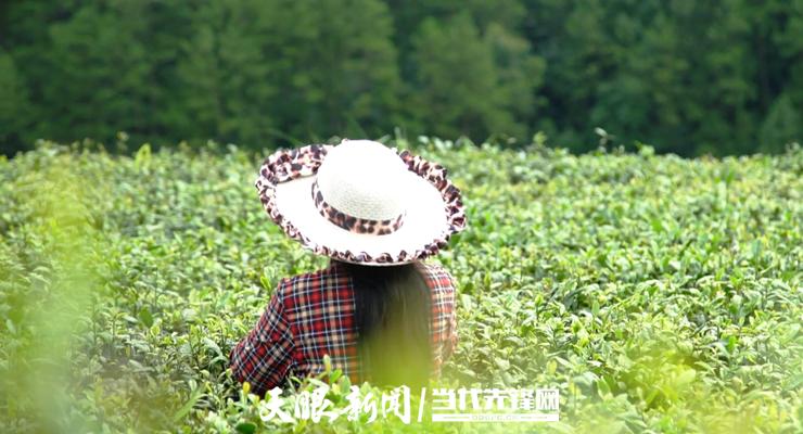 """""""云""""上茶""""海""""!贵阳市积极推动农业加大数据融合发展"""