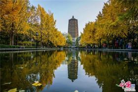 昆玉河畔玲珑塔 京城晚秋怒放的色彩(图)