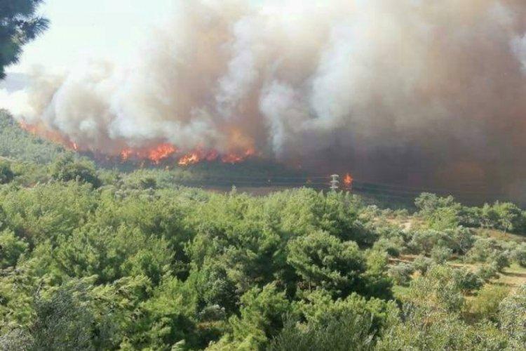 土耳其哈塔伊发生森林大火 数十栋大楼住民被疏散 第1张