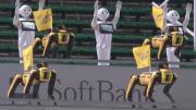 日本棒球比赛现场出现机器人球迷现场尬舞气氛诡异