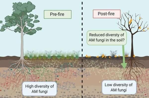 森林火灾后 需引入真菌促进生态系统恢复