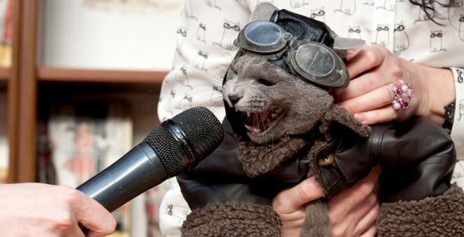 俄罗斯国际猫展 喵星人奇装异服争相卖萌