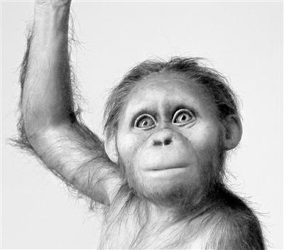 人类祖先大脑与类人猿相似 但发育缓慢
