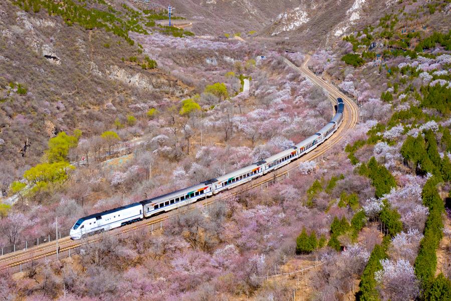 北京市郊铁路S2线沿线山花绽放
