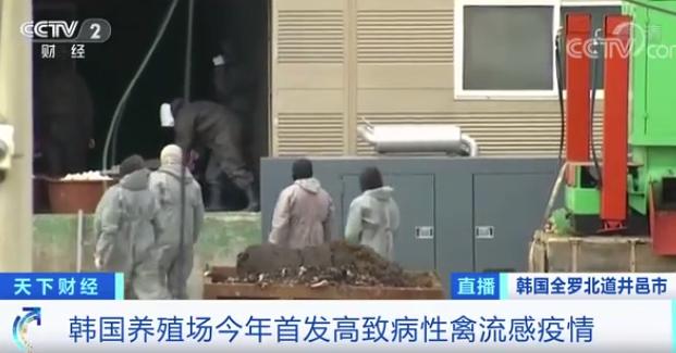 "allbet(allbet6.com):危急警报升至""严重""!时隔2年多,高致病性禽流感疫情又现!韩国扑杀40万只鸡鸭… 第4张"