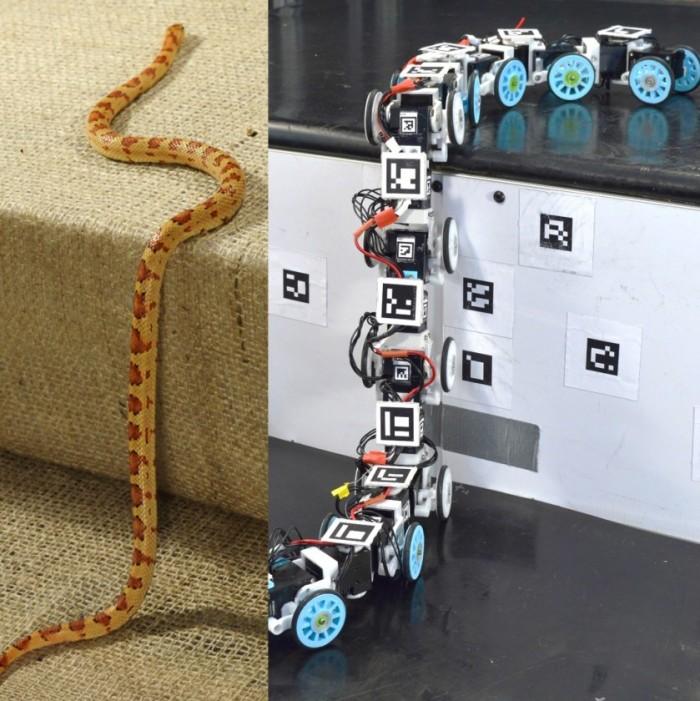 受蛇启发 科学家研发出能滑行并越过障碍物的机器人 能够轻松解决各种障碍