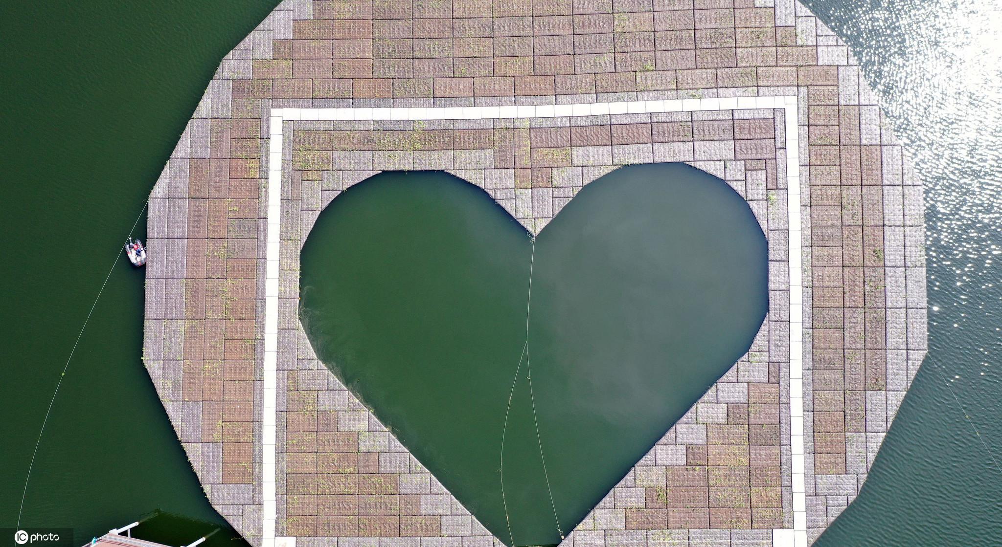 """韩国春川人工植物岛""""心形""""造型吸睛"""