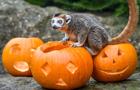 英国动物园用南瓜装载食物 让动物齐过万圣节