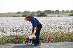 """极飞秋收起""""翼""""带无人机下乡 代替拖拉机避免棉花减产"""