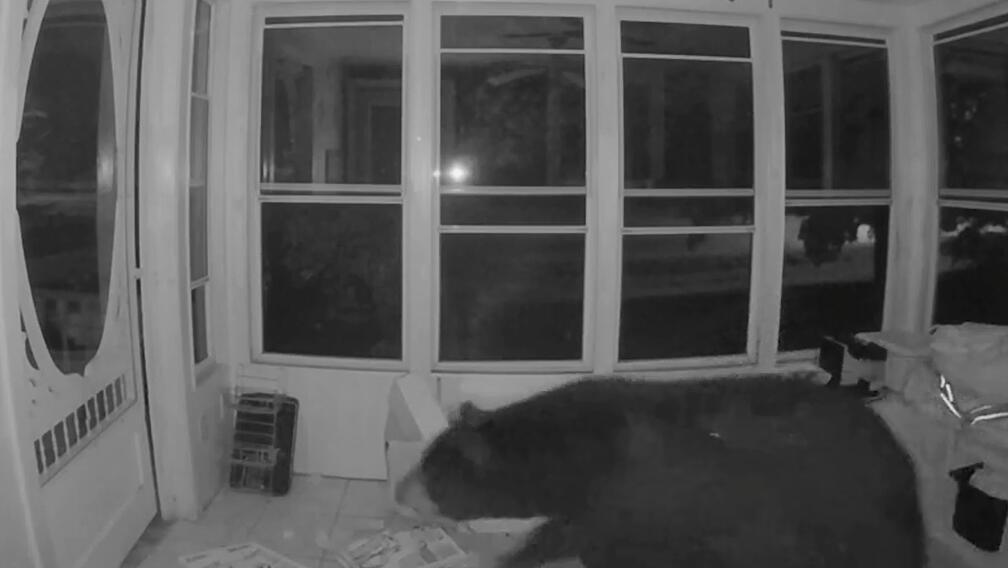 熊出没!监控摄像头拍到一黑熊深夜闯入民居觅食
