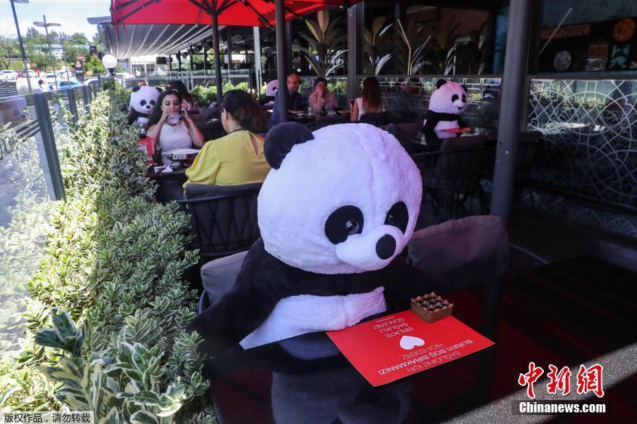 """欧博开户:土耳其餐厅让""""大熊猫""""陪主顾用饭 萌萌哒提醒保持社交距离 第1张"""