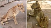 苏丹一家动物园内狮子饿到瘦骨嶙峋好似行走的骨架