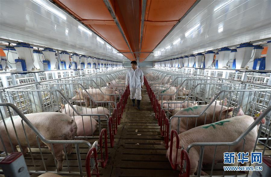 河北魏县:发展智能生猪养殖新模式