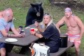 美国一家庭野餐时遇黑熊蹭吃主动喂食被批