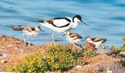 携手保护生物多样性  呵护生态文明发展