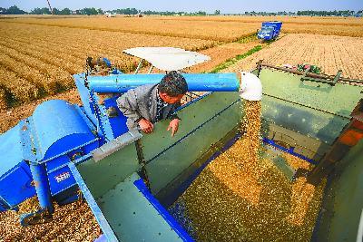 """缺口1.3亿吨,中国需担心""""缺粮""""吗"""